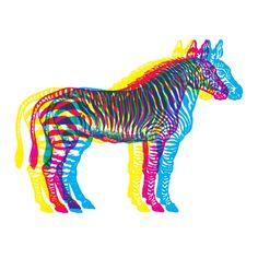 primary colour overlapped zebra