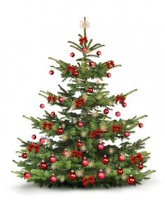 Put a Wireless Scale under your Christmas tree! http://blog.withings.com/en/2012/11/27/turkey-pageant-the-plump-poultry-photo-contest/