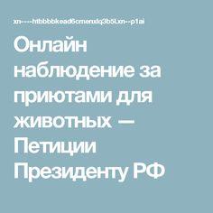Онлайн наблюдение за приютами для животных — Петиции Президенту РФ