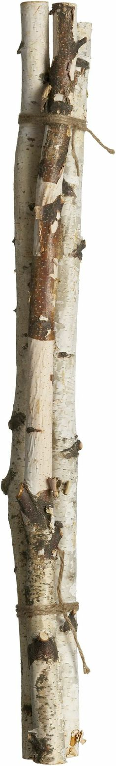 Set of 3 Birch Branches  | Crate