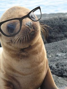 Hipster Seal Pup