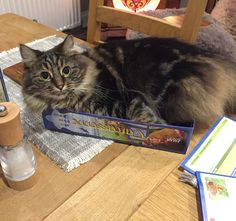 """""""Ori joining in with games night."""" . credit: @stampycatyt . C'monBoard Cats features the most adorable cats and kittens. Keep an eye on C'monBoard website [link in the bio] for your daily share of cuteness. . . . Make sure to check out our cat-themed products at www.cmonstore.com"""