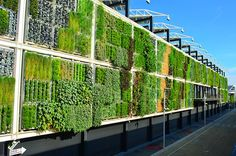 What does a football-field sized edible vertical farm look like? Like this. Check out this ZipGrow vertical farm at the USA Pavilion. Astonishing!