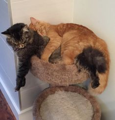 These Cats Love Sharing Their Tiny Bed Together