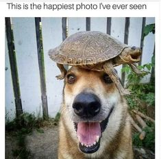 Mid-Week Animal Memes And Tweets For The Soul