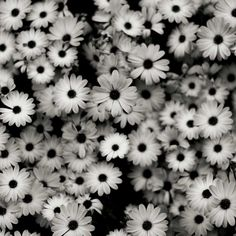 Black and white flowers, wallpaper. Thanks to all the people who follow me!! Kisses, Claudia