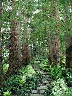 Eclectic Estate - Traditional - Landscape - san francisco - by Zeterre Landscape Architecture Diy Garden, Shade Garden, Dream Garden, Garden Paths, Forest Garden, Woodland Garden, Forest Landscape, Forest Path, Garden In The Woods