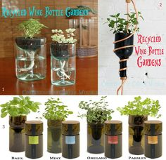 Recycled wine bottle gardens