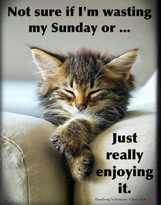 Sunday humor   Relaxing   Doing Nothing   Enjoying Life   Cute Cat   Sunday Funday   Animal funny: Not sure if I'm wasting my Sunday or ... just really ENJOYING it.  Whatever you plan on doing today may it be something that brings you much pleasure. Have a wonderful Sunday, friends. ☀