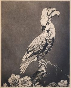 Edward Julius Detmold, 1924 |Cockatoo #edwardjuliusdetmold#etching#aquatint#intaglio#printart Chelsea James, Norwich School, James Abbott Mcneill Whistler, Drypoint Etching, French Sculptor, National Gallery Of Art, Aircraft Design, Adam And Eve