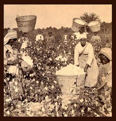 SLAVES, EX-SLAVES, and CHILDREN OF SLAVES IN THE AMERICAN SOUTH, 1860 -1900 (11)    Pickin' cotton in Georgia.