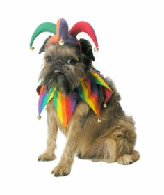 This has Phoebe written all over it .Jingling Jester Pet Costume
