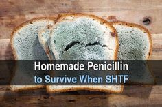 Homemade Penicillin To Survive When SHTF