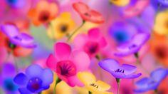 papéis de parede de flores Flower Wallpaper-wallpapers-wallpaper4-600x338