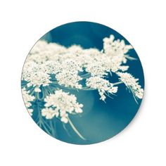 Queen Anne's Lace Flowers Round Stickers - photographer gifts business diy cyo personalize unique