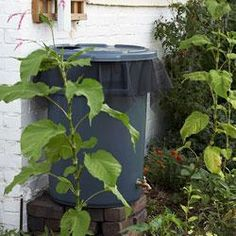 Make a rain barrel in 7 easy steps
