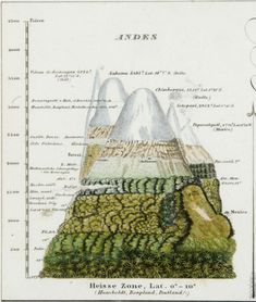 Figure 1. Alexander von Humboldts vegetation of the Andes (source: Anne Buttimer Alexander von Humboldt and planet Earths green mantle Cybergeo : European Journal of Geography [online]. Epistemology history teaching document 616. Available from doi:10.4000/cybergeo.25478. Online since August 2012 [accessed January 2015]). #worldhistoryteaching #world #history #teaching #john #green