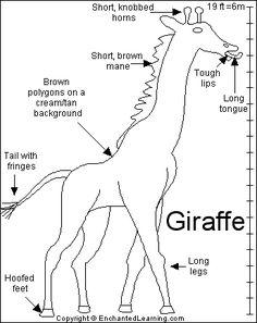 Mechanics of my favorite animal.