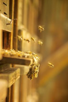 bees + hive