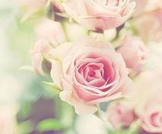 #romantic  #flowers #photography #pink #nostalgic #roses