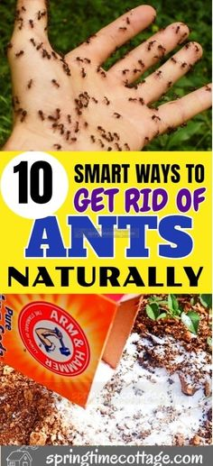 If ants are coming in anywhere they are not invited, you need to get rid of them without using harmful chemicals. Here are 10 methods to get rid of ants from your home and garden.