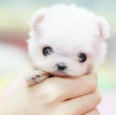 omg i want this puppy