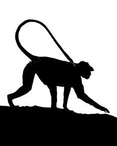 Monkey Silhouette | Monkey silhouettes