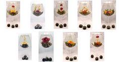 tiny plants in wine glasses