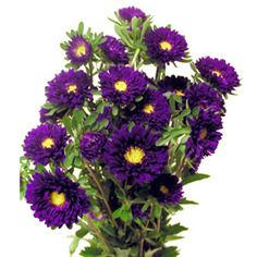 Purple Aster--great because they're inexpensive and they naturally occur in your purple/yellow. They're also like daisies so a bit rustic.