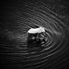 Waves Around Elephant © Laurent Baheux