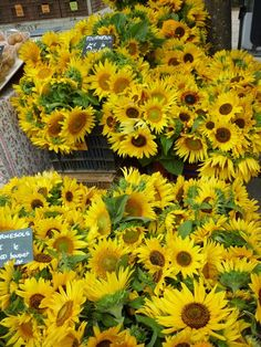 Sunflowers in Provence market