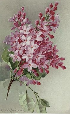 СИРЕНЬ Lilac Painting by Catherine Klein on Etsy ♥ Art Vintage, Decoupage Vintage, Vintage Art Prints, Vintage Images, Art Floral, Catherine Klein, Impressions Botaniques, Flower Pictures, Botanical Prints