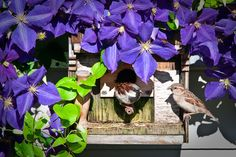 BIRDHOUSE   Flickr - Photo Sharing!