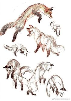 news - Animal - Art Sketches Animal Sketches, Animal Drawings, Art Drawings, Fox Drawing, Drawing Sketches, Drawing Ideas, Arte Sketchbook, Poses References, Fox Art