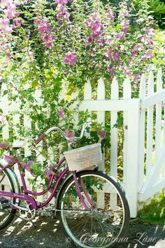 Purple bicycle, white picket fence and cottage garden Vibeke Design, Deco Nature, White Picket Fence, Picket Fences, White Fence, Bloom, Bicycle Art, Vintage Bicycles, Garden Gates