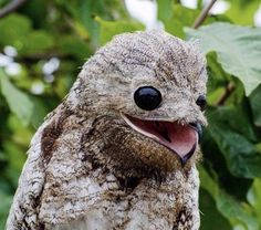 Pulp Fiction, Great Potoo, Potoo Bird, Dog Pictures, Animal Pictures, Turtle Facts, Rick Y Morty, Strange Photos, Koalas