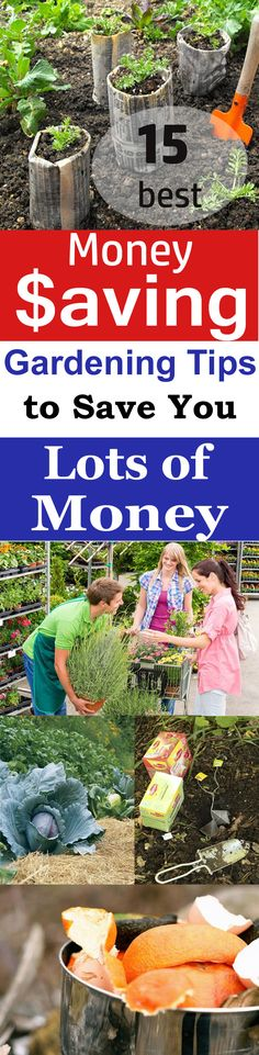 Gardening can be an expensive hobby, but if you want, you can save a lot of money with the help of these money-saving gardening tips. Check out!