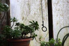 Jasenko Rasol, Botanical photography, 2010 - 2011
