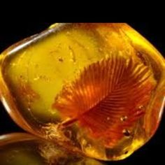 Baltic amber with inclusion