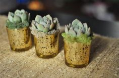 Too expensive, but I love these! Potted Succulent Favors. $160.00, via Etsy.