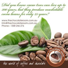 Did you know cacao trees live up to 200 years, but they produce marketable cocoa beans for only 25 years?  Visit www.thechocolateroom.com.au for more details.