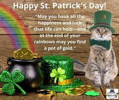 Enjoy St. Patty's Day! #mewow #catcafe #stpatricksday #catsandcoffee #adoptacat #adoptdontshop #catadoption #lovecats #kitten #kittens #cutecat #cutecatsofinstagram #catpicoftheday Instagram News, Cats Of Instagram, Cat Cafe, Pot Of Gold, Kittens, Adoption, Rainbow, Day, Cute