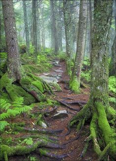 Really Great Resource of Green Mountain National Forest, Vermont. Know More about Green Mountain National Forest, Vermont here -- Read more at the image link. #CampingFood