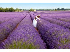 Türkiye'nin lavanta cenneti: Kuyucak Köyü | NTV Lavander, Lavender Fields, Lavender Oil, How To Treat Lice, Lavandula Angustifolia, One Drop, Muscle Tension, Insect Repellent, Habitats
