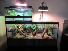 Crabitat goals needs more sand, but when I get a bigger tank I'm going to take my current tank that is super similar to the topper and do this! I love the jungle theme for crabitats, so I'm going to put more vines and stuff in it. Aquatic Turtle Tank, Turtle Aquarium, Aquatic Turtles, Hermit Crab Homes, Hermit Crab Tank, Hermit Crabs, Turtle Habitat, Reptile Habitat, Aquariums