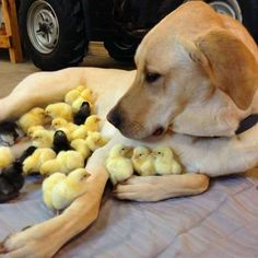 The Ultimate Chick Magnet http://ibeebz.com