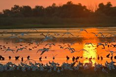 Danube's Delta (Romania) Beautiful Places To Visit, Places To See, Romania People, Danube Delta, Visit Romania, Romania Travel, Danube River, Arctic Animals, Seen