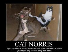cat sayings | Cat Norris | Funny jokes, funny pictures, funny videos, funny quotes