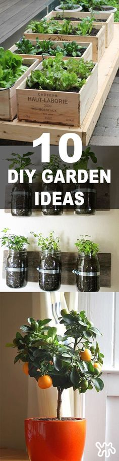 Here are 10 great space-saving ideas for mini indoor gardens that get two green thumbs way up. They are gardening projects that will work on even the smallest patio or balcony...plus tips for growing citrus indoors if you don't have a balcony at all.