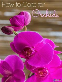 Orchids require some specific TLC not common of your average houseplant, knowing how to care for orchids is important, so be sure you follow these steps.